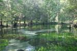 Baltzell Spring, June 2003