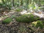 Suwannee Limestone Residual Chert (Aucilla Wildlife Management Area, Florida)