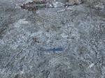 Torreya Formation exposed at base of Jackson Bluff, Florida