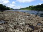 Chattahoochee Formation Exposed at Chattahoochee Boat Landing, Apalachicola River