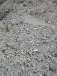 Oyster Bed at Langston Quarry, Franklin County