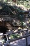 Rock Springs Bridge