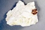 Limestone Sample - Most Likely Ocala
