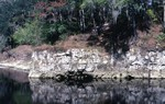 Suwannee Limestone Outcrop On Suwannee River