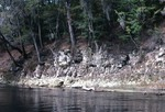 Limestone Outcrop On Suwannee River