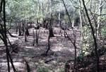 Chipola River Floodplain, Florida Caverns State Park