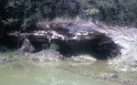 Suwannee Limestone in Jefferson county