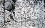 Key Largo limestone at Windley Key Quarry