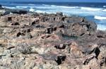 Coastal Outcrop Of Anastasia Formation