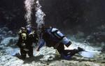 Fanning Springs Diving