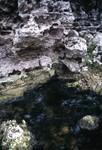 Suwannee Spring Wall