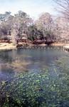 Jackson Blue Hole Spring