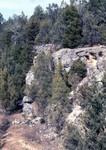 Ocala limestone in Waddells mill pond pit