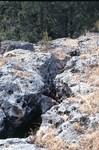Ocala limestone in Waddells mill pond