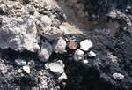 Ocala limestone near waddells mill pond pit