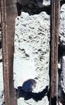 Suwannee Limestone core close up