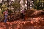 Cypresshead Formation Screven Formation