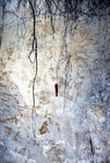 Cypresshead Formation, Jessup GA, Linden Bluff