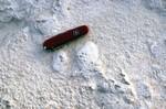 Basal Cypresshead Mollusk Molds Grandin Sand Pit Putnam Co.