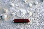 Cypresshead Mollusk Casts Grandin Sand Pit Putnam Co.