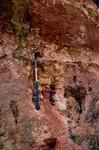 Cypresshead Formation Jessup GA