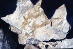 Ocala LS dissolution along old burrow structures T. Scott