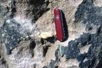 Cypresshead Formation Lady Lake, Lake Co.